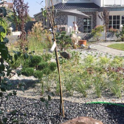 Ihr Team für Gartengestaltung, Gartenpflege und Gartentipps!