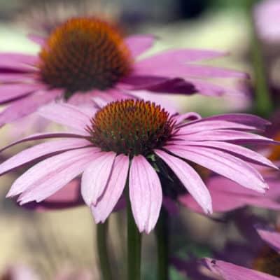 Ihr Team für Gartengestaltung, Gartenpflege und Gartentipps! Ihr Team der A.K. Gartengestaltung